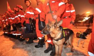 """【警犬训练】工作强度大,训练任务重,""""工作犬""""太不容易了"""